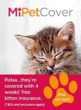MiPet Cover kitten advert